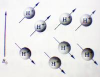 1H自旋核在外磁场中的两种取向示意图